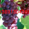 红提葡萄产地 沙红桃富岛桃王青皮核桃酥梨